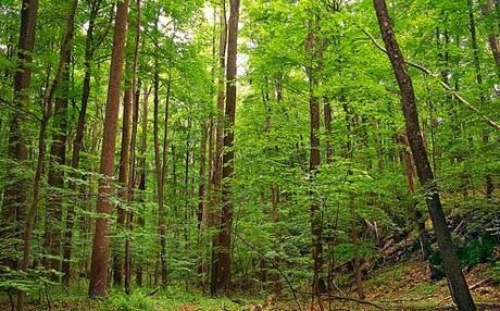 Hrvatske šume otpustile stotine radnika, a šefovi će dobiti milijune kuna!?
