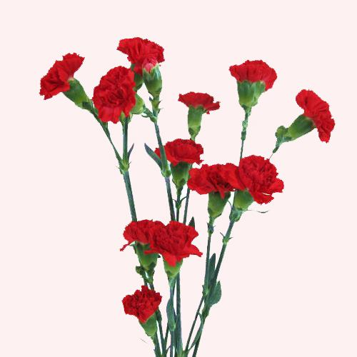 Čestitamo 1. svibnja, Međunarodni praznik rada